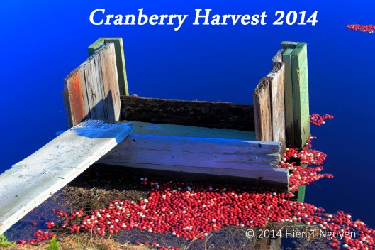 Cranberry bog sluice gate