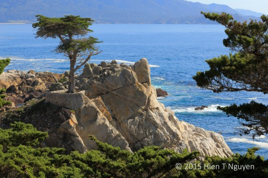 Lone Cypress on 17-Mile-Drive near Carmel, CA.