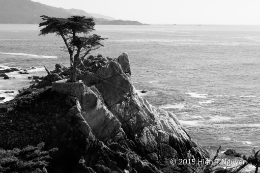Photo 2. Lone Cypress in monochrome.