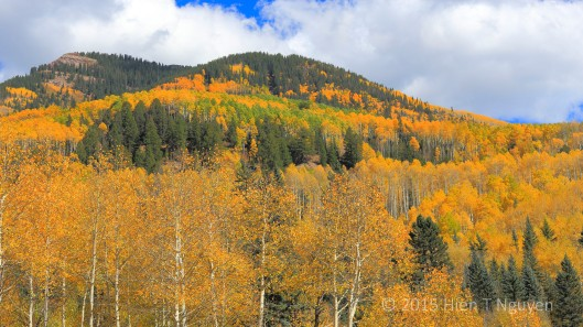 Fall colors off Highway 145 near Rico, CO.